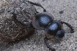 What Are the Stages of Beetle Development?