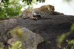 Cheap African Tours