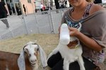 How to Get Newborn Goats to Nurse