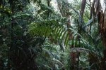Panama Rainforest Tours