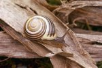 Where Do Snails Come From?