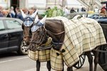 How to Make a Horse Blanket Pattern
