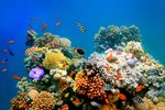 Coral Reefs & Injuries to People