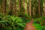 Facts About Redwood National Park