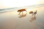 Pet Friendly Beaches in Eastern Florida