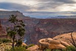 Horseback Riding in the Grand Canyon of Arizona