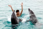 Swimming with Dolphins in Aruba