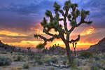 Attractions and Activities in the Mojave Desert