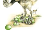 How to Hatch Emu Eggs