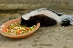 Foods That Skunks Eat