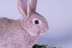 What Happens If a Rabbit Eats Cat Food?