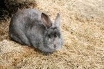 How to Treat a Rabbit For Ticks