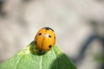 How to Grow Your Own Ladybug House
