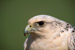 Why Are Birds of Prey Important to Ecology?