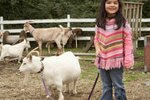How to Wean a Pygmy Goat