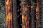 RV Parks in Sequoia
