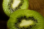 Animals That Like to Eat Kiwi Fruit