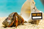How to Make Salt Water for Hermit Crabs