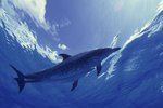 What Are a Dolphin's Biomes & Climate?