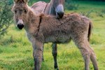 How to Raise a Donkey as a Pet
