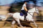 How to Stop a Walking Horse From Pacing