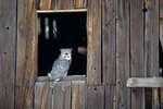 How to Keep Birds Out of a Barn