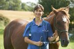 How to Treat an Equine Shoulder Injury