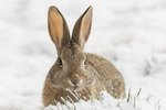 How to Feed Wild Rabbits in the Winter