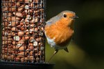 Best Ways To Attract Wild Birds To Your Garden