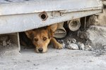 Facts About Street Dogs in Mexico