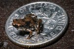 The World's Smallest Miniature Animals