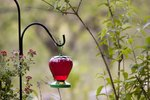 How to Feed a Hummingbird Using Sugar Water