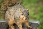 How to Tame a Wild Squirrel