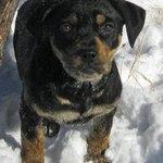 Amy mixed adoptable pup