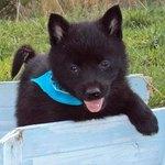 Adoptable 6 Terrier Mix