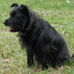 Janey (The Schnoodle!)