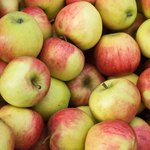 pile of Jonagold apples