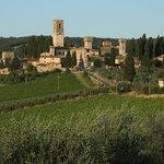 Olive trees in Tuscany region of Badia a Passignano, Italy