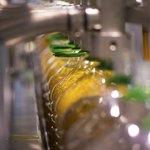 Olive oil production line