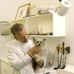 Yorkies available from Yorkie rescue groups have been fully vetted, spayed or neutered.
