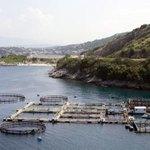 A fish farm in coastal waters.