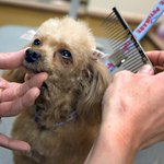 Industries such as kennels, animal shelters and pet stores may offer employment.