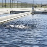 Outdoor raceway for trout fishing