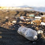 Plastic bottle litter on the shoreline