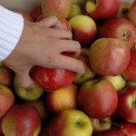 pile of Braeburn apples