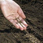 A hand planting seeds in soil.