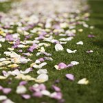 Originally, the flower petals may have been used to ward off evil spirits.