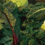 Green vegetables may prevent cancerous tumor growth in humans.