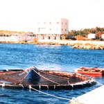 Cages for fish cage farming may be round or rectangular.