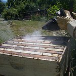 Using a smoker on a hive